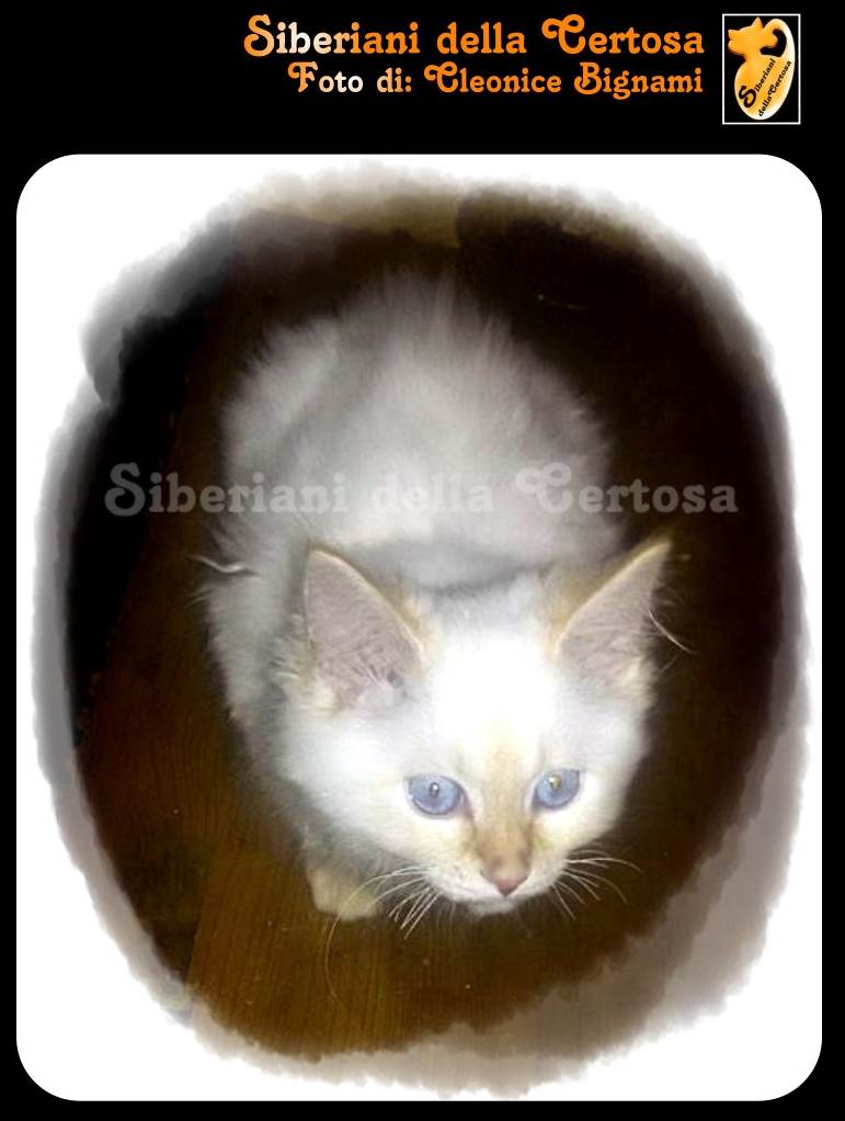 16fisico da gatto