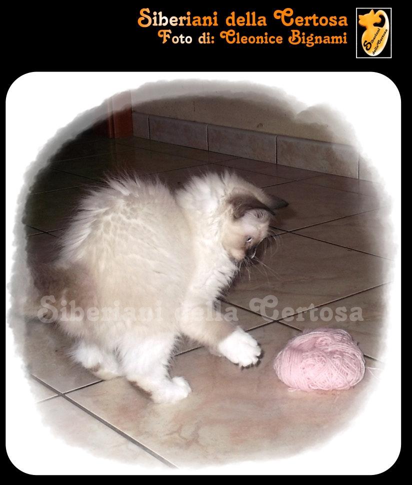 19fisico da gatto