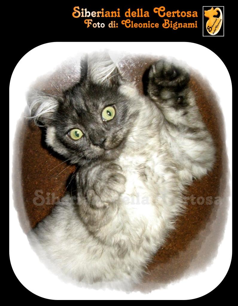 1fisico da gatto