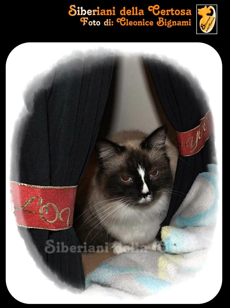 21fisico da gatto