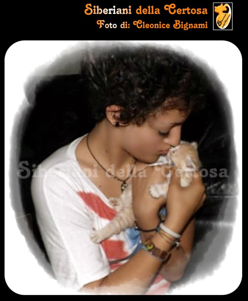 43il gatto siberiano