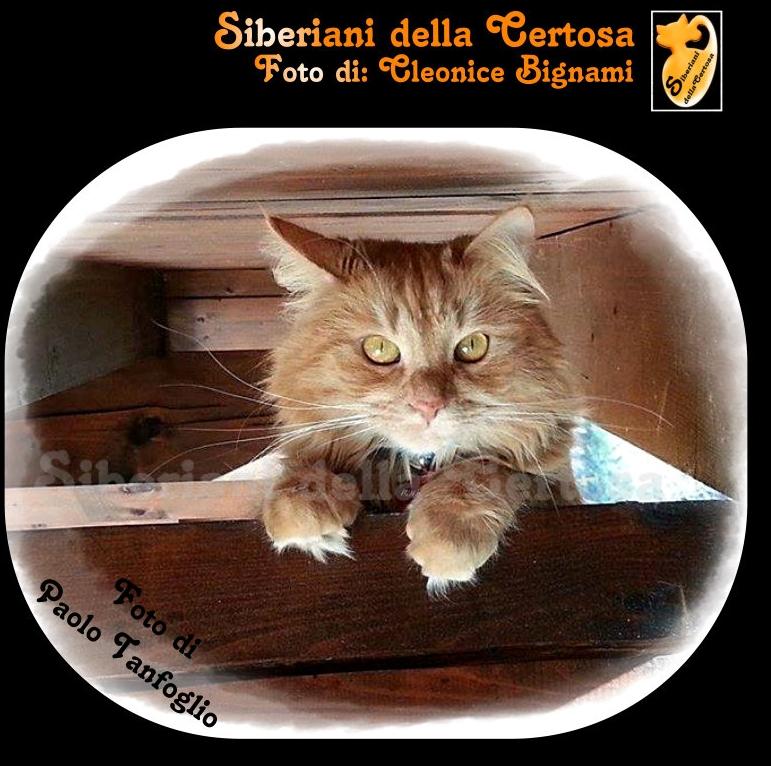 4fisico da gatto