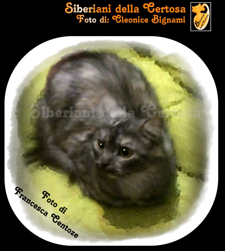 6fisico da gatto