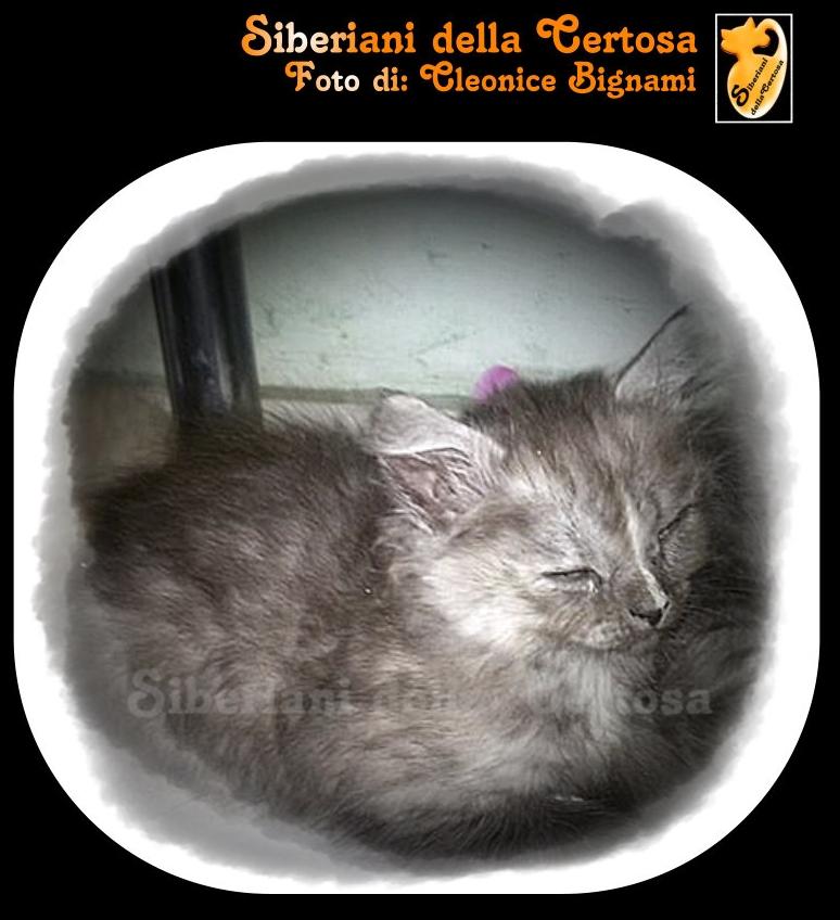 8fisico da gatto