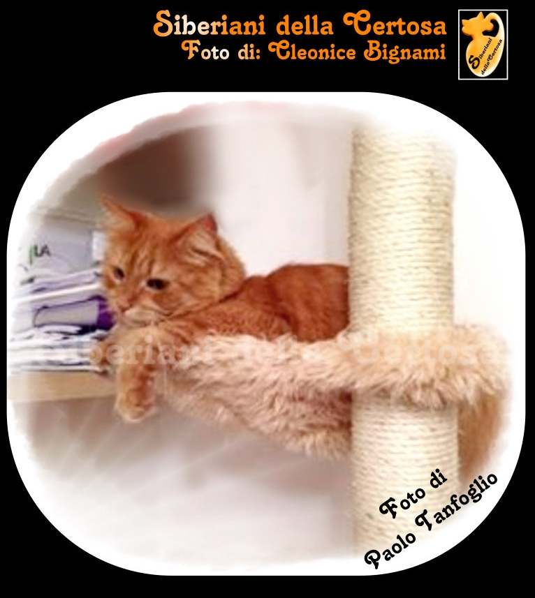 9fisico da gatto