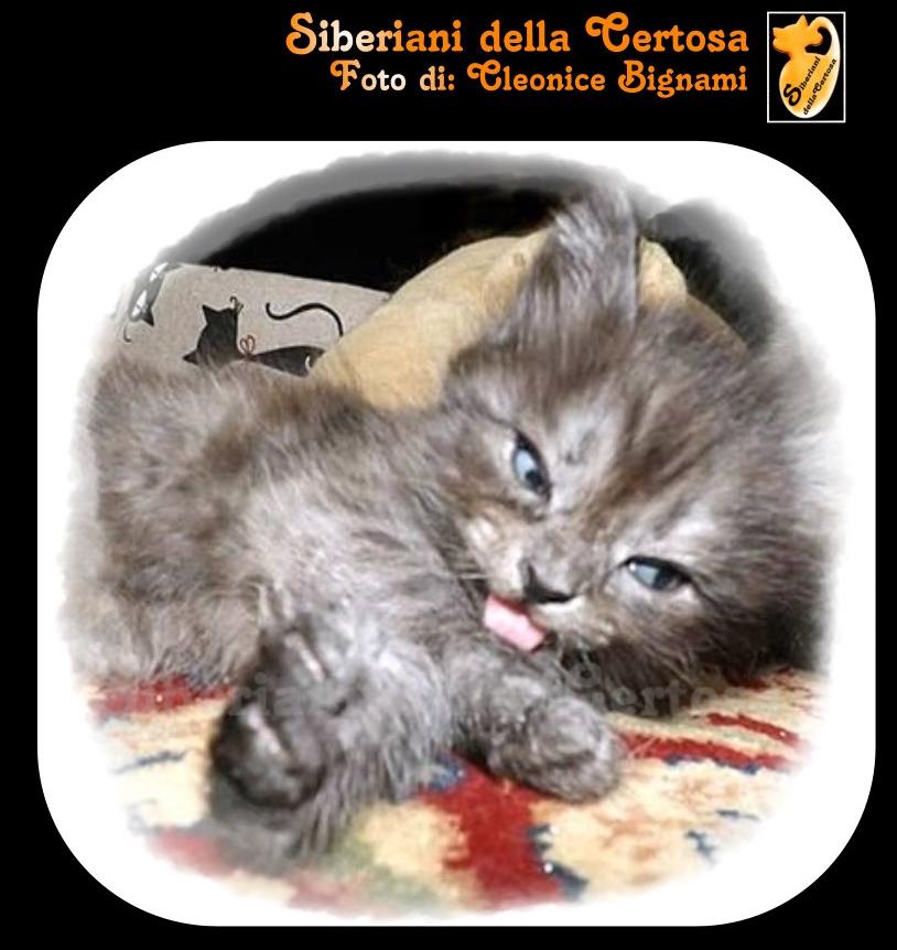 7esigenze da gatto
