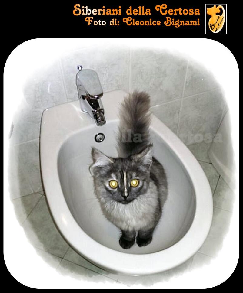 8sigenze da gatto