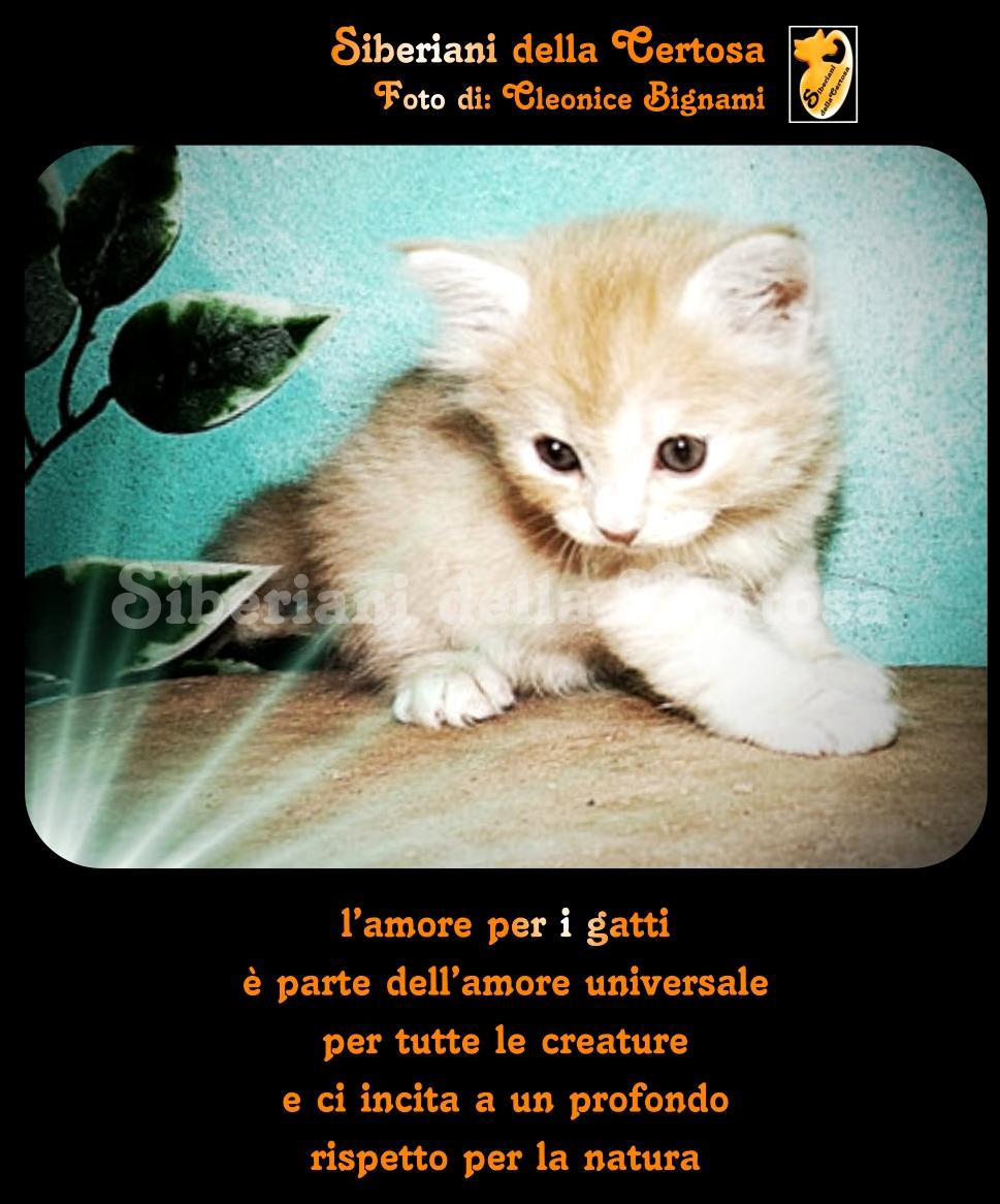 Favoloso Aforismi e Frasi sui Gatti « UN31