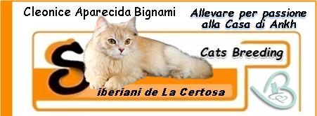 Alla Casa di Ankh : Allevamento Gatti Siberiani